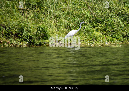Bird Sanctuary Toronto Island