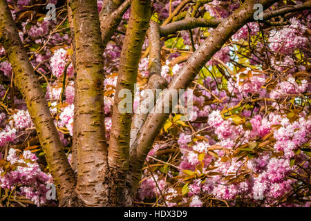 Colorful leaves and petals of flowers on a blossoming tree in spring - Stock Photo
