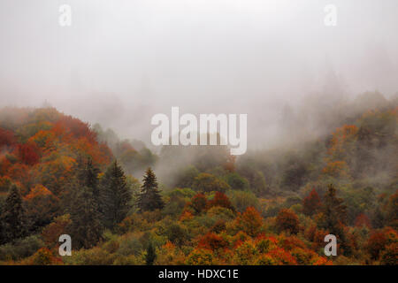Autumn rain in Carpathian mountain forest. Colorful wood in clouds of fog - Stock Photo