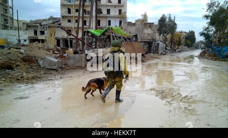 Aleppo, Syria. 23rd Dec, 2016. A Russian sapper with a military dog during an operation to search and clear mines - Stockfoto