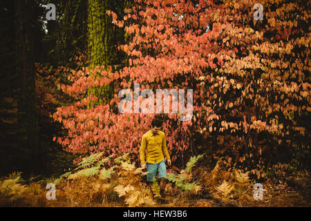 Young man walking through forest near Shaver Lake, California, USA - Stockfoto