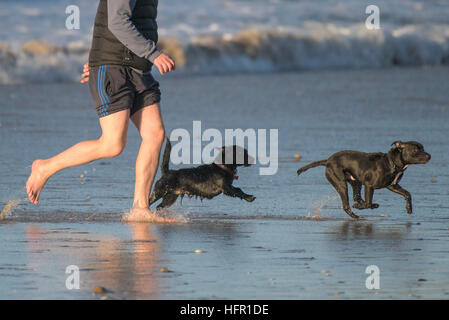 A man playing with his two dogs on the dog friendly Fistral Beach in Newquay, Cornwall. - Stock Photo
