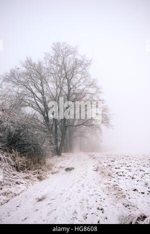 Vertical photo of winter landscape with heavy morning fog. Alley of trees with ice on branches grow next to footpath - Stock Photo