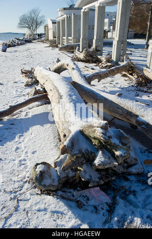 Sassnitz, Germany. 06th Jan, 2017. Fallen trees in the Baltic resort town of Sassnitz, Germany, 06 January 2017. - Stock Photo