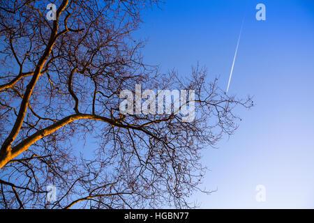 Tree branch on blue sky background. - Stock Photo