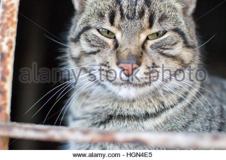 Cute gray cat. It looks very serious, angry. - Stock Photo
