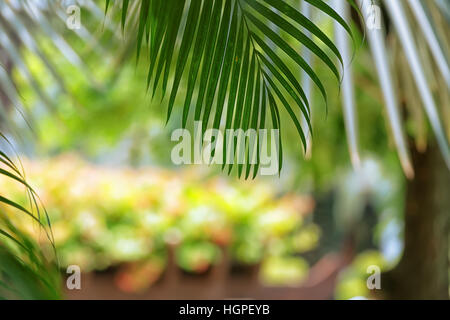 Palm branch over blurred background in sunny day in tropical garden - Stock Photo