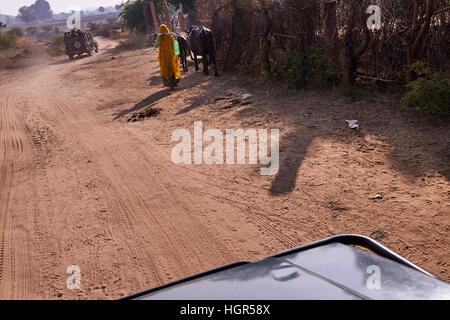 Rajastani women with buffaloes walking on the village road, - Stock Photo