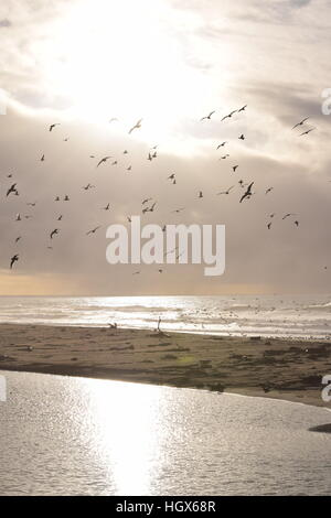Seagulls silhouetted by the sun over the ocean - Stock Photo