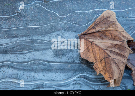 Windsor, UK. 13th January, 2017. Patterns in the ice in Windsor in Berkshire. Credit: Mark Kerrison/Alamy Live News - Stock Photo