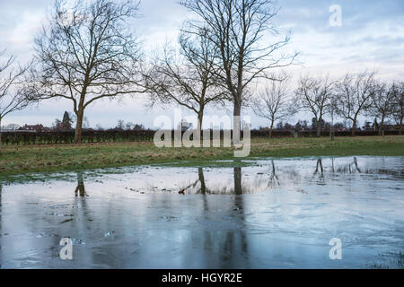 Windsor, UK. 13th January, 2017. A large frozen puddle alongside the Long Walk in Windsor Great Park. Credit: Mark - Stock Photo
