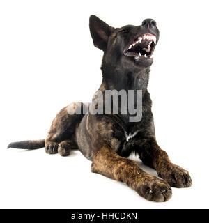 Big Angry Dog Ltd