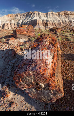 Petrified Tree Section - Petrified Forest National Park, AZ - Stock Photo