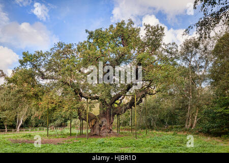 Major Oak, Sherwood Forest, Nottinghamshire, England, UK. Estimated to be over 1150 years old, and associated with - Stock Photo