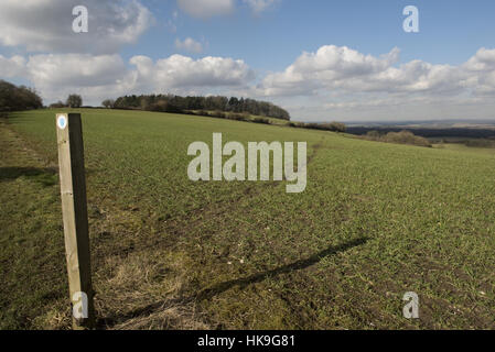 Footpath sign and path cut through stages of a winter wheat field on the North Wessex Downs in February - Stock Photo