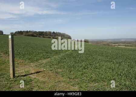 Footpath sign and path cut through stages of a winter wheat field on the North Wessex Downs in April - Stockfoto
