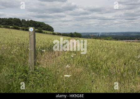 Footpath sign and path cut through stages of a winter wheat field on the North Wessex Downs in July - Stockfoto