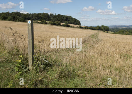 Footpath sign and path cut through stages of a winter wheat field stubble on the North Wessex Downs in late August - Stockfoto