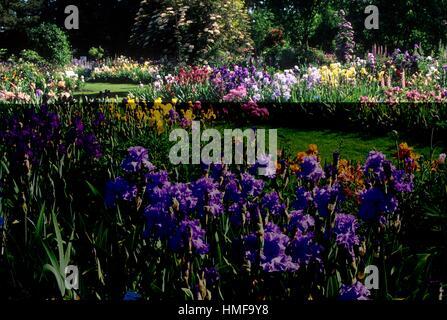 Usa Oregon Marion County Schreiners Iris Gardens Stock