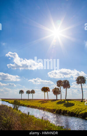 Palm trees across water canal in south central Florida - Stock Photo