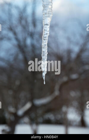Closeup of a one sparkling icicle against black clouds and a snow covered apple tree - Stock Photo