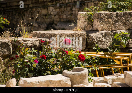 Roses on the rocks at Roman Agora Athens Greece - Stock Photo