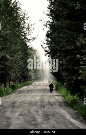 Forest road near gustavus, south alaska, usa - Stock Photo