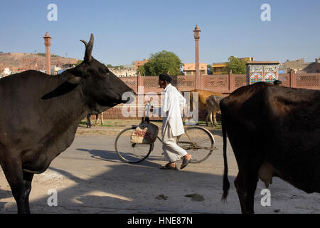Street scene,Jodhpur, Rajasthan, India - Stock Photo
