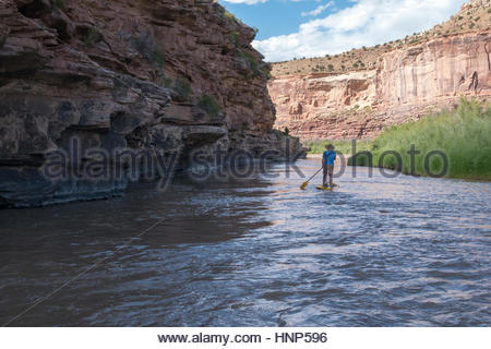 A man stand up paddle boarding on The Ruby-Horsethief section of the Colorado River. - Stock Photo