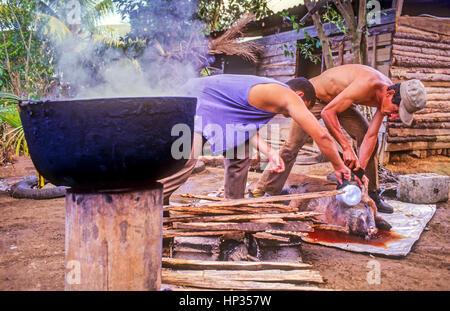 pig slaughter, Vinales, Pinar del Rio province, Cuba. - Stock Photo