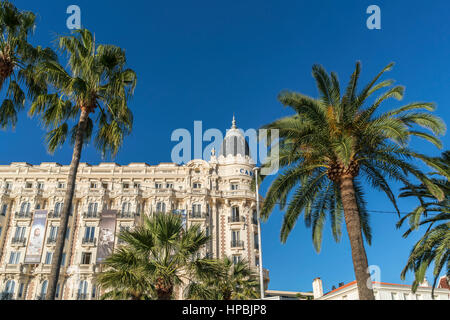Carlton, Hotel, Facade, Promenade de Coisette,  Palm tree, Cannes, Cote d'Azur, France, - Stock Photo