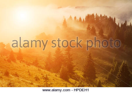 Misty dawn in the mountains in summer. - Stock Photo