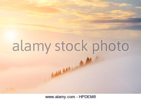Amazing misty sunrise in the mountains in summer. - Stock Photo