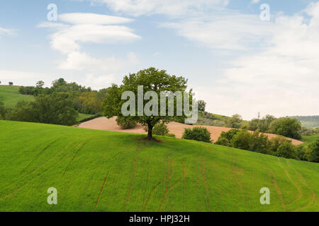 Tuscany landscape, beautiful green hills and lonely tree springtime in Italy,Europe - Stock Photo