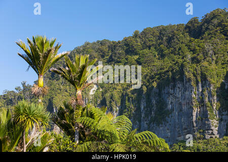 Punakaiki, Paparoa National Park, West Coast, New Zealand. Wooded limestone cliffs and nikau palms (Rhopalostylis - Stock Photo
