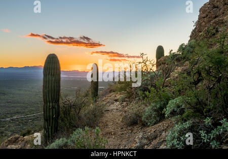 Saguaro cacti stand against setting sun at Gates Pass near Tucson Arizona - Stock Photo