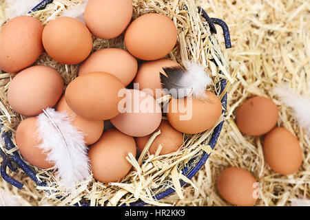 Large clutch of fresh free range eggs in a nest of straw. - Stock Photo