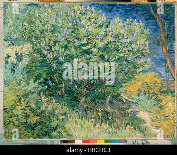 Gogh, Vincent van - Lilac Bush - Stockfoto