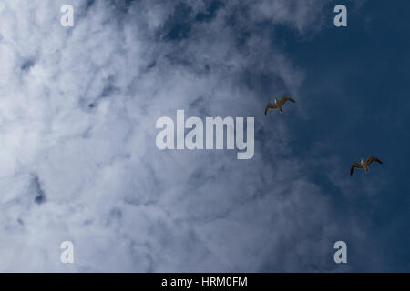 A day out at Formby beach with seagulls flying over head - Stock Photo