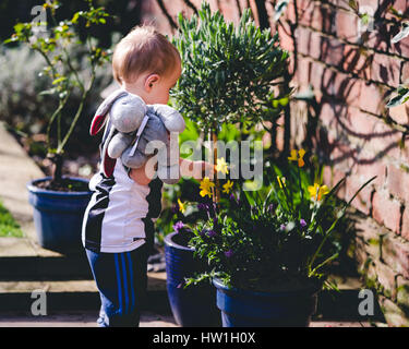 Little boy playing with flowers in garden for first time - Stockfoto