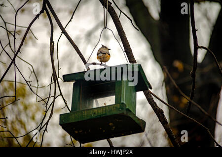 Bird at Central Park - New York, USA - Stock Photo