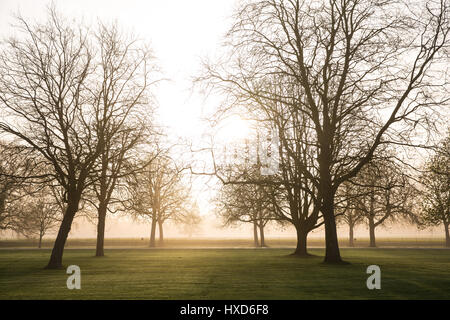 Windsor, UK. 28th March, 2017. The sun rises on a misty morning behind horse chestnut and London plane trees lining - Stock Photo