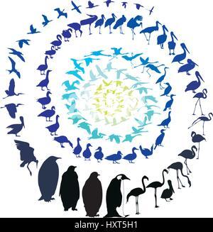 Birds Waterfowl in spiral - Stock Photo