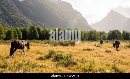 Horses walk out to graze in a meadow in Torres del Paine National Park, Chile. - Stock Photo