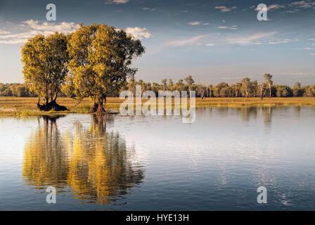 Sky reflected in the Kakadu wetlands in Kakadu National Park, Northern Territories, Australia - Stock Photo