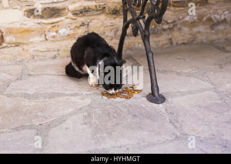 Homeless cat eating on a street cat food - Stock Photo
