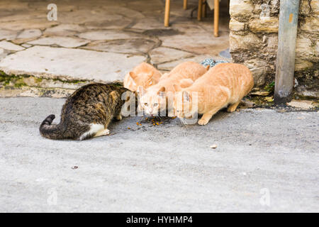 Homeless cats eating on a street cat food - Stock Photo