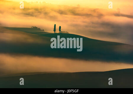 Tuscany, two lonely trees and fog in backlight. Italy, Europe. - Stock Photo