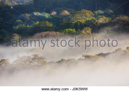 Misty morning in Soberania National Park, Republic of Panama. - Stock Photo