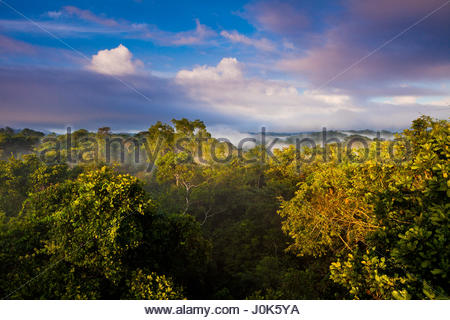 Morning in Soberania national park, Republic of Panama. - Stock Photo